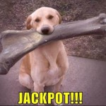 Meet the Luckiest Dog on Earth – Anonymous Canine Wins $3 Million Lottery Jackpot!